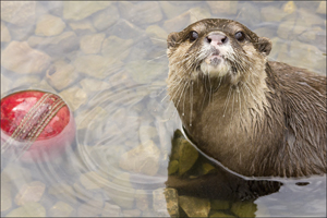 Visit Rod the otter (and his rfiends) at WWT Barnes this weekend